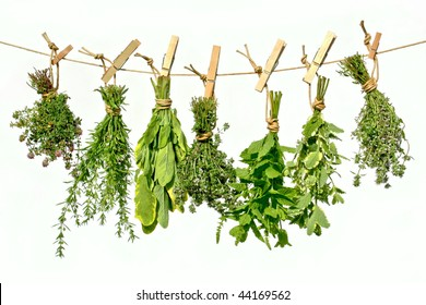 Fresh herbs hanging on a line for drying