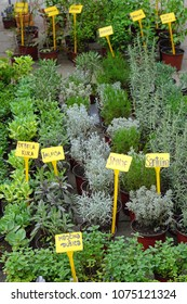 Fresh herbs healthy edible plants