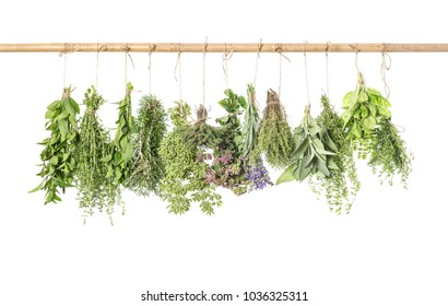 Fresh herbs isolated on white background. Thyme, basil, rosemary, sage, mint, oregano, marjoram, savory, lavender. Kitchen herb