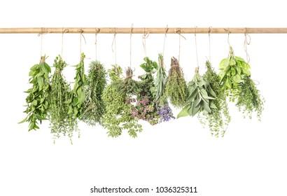 Fresh herbs isolated on white background. Thyme, basil, rosemary, sage, mint, oregano, marjoram, savory, lavender. Kitchen herb