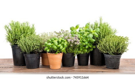 Fresh herbs isolated on white background. Food ingredients. Basil, rosemary, thyme