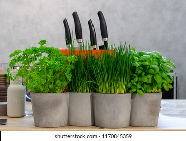 fresh herbs and knifes on table in front of grey background