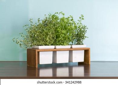 Fresh herbs in modern, colorful kitchen