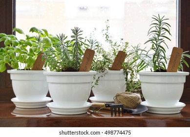Fresh herbs in pot on windowsill. Shallow dof