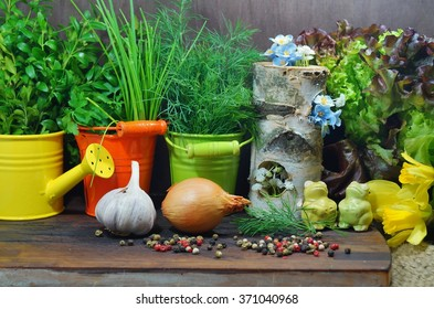 Fresh herbs and spices in the kitchen on a wooden table