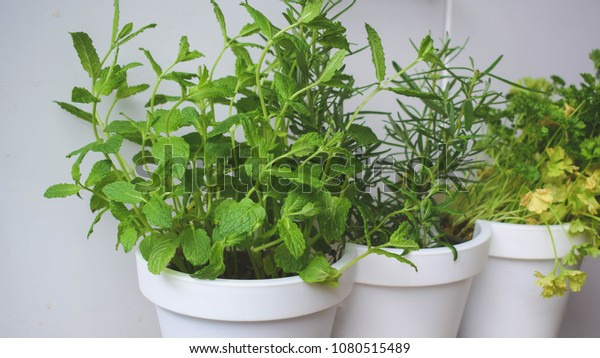 Shutterstock & Fresh Herbs White Flower Pots On Stock Photo (Edit Now ...