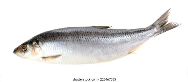 1000 Frozen Herring Fish Stock Images Photos Vectors