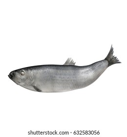 Fresh herring fish isolated on white. 3D illustration