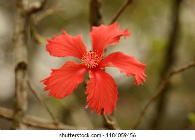 The fresh hibiscus flower