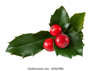 Fresh holly leaves and red berry over white