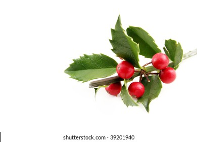 Fresh holly shot on a white background with room for text.