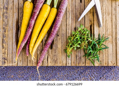 Fresh home grown tri colored carrots on a cutting board with thyme and rosemary herbs.   The carrots are purple and yellow.  A pair of herb sissors are also shown.