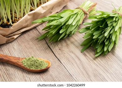 Fresh homegrown barley grass and powder with copy space