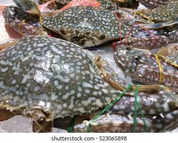 Fresh horse crab at market