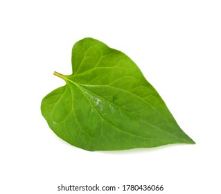 Fresh Houttuynia cordata leaves isolated on a white background