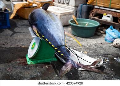 Fresh huge big 40 kg. tuna fish lying on the scales near fish market on the tropical island Bali / Seafood at the fish market / Indonesia, Bali