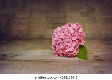 Fresh hydrangea on a textured background with retro vintage colors with copy space