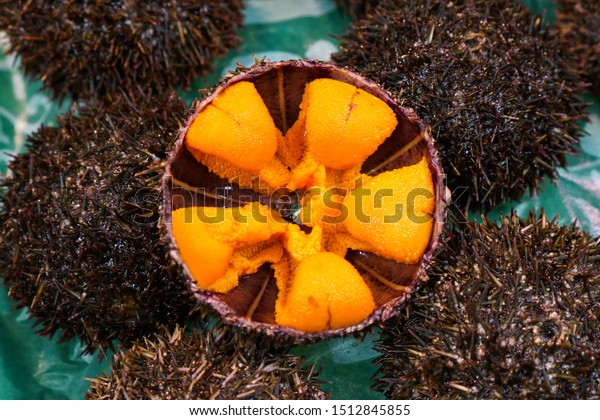 Fresh Japanese sea urchin (uni sashimi), close up