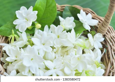 Fresh Jasmine flower in the basketry basket.