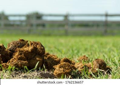 Fresh juicy pile of horse manure on the organic farm ground.