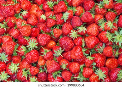 Fresh juicy strawberries - filled frame