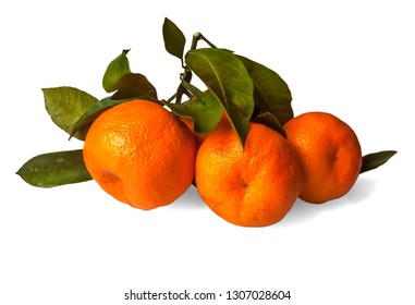 fresh juicy tangerines on a branch isolated on white background