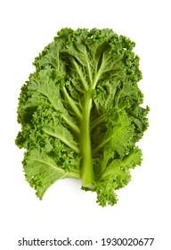 fresh kale isolated on white background
