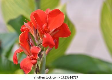 fresh kana flower macro model