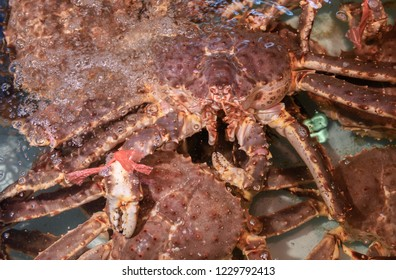 Fresh King Crab in water at fish market in Japan. Taraba is name the king of crabs. Tasty, delicious and expensive. Hokkaido's famous seafood.Alaska crab.