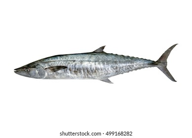 Fresh king mackerel fish isolated on the white + clipping paths