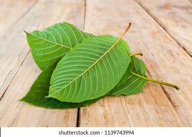 Fresh kratom leaves on wooden table.