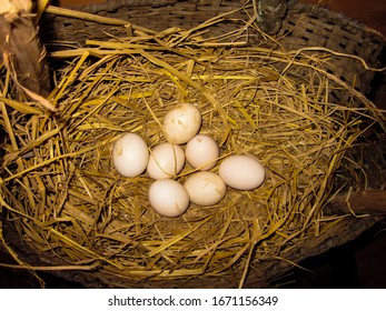 Fresh  Laid Eggs in a Straw Nest,   Chicken Nest at Nepali Village with eggs