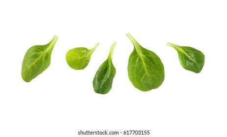 fresh lamb's lettuce leaves on white background
