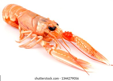 Fresh langoustine in closeup on white background