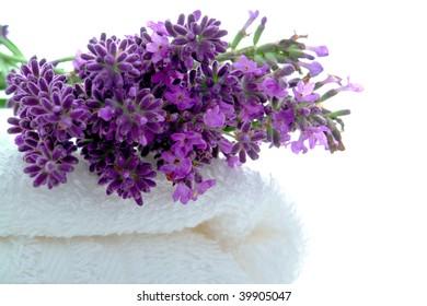 Fresh lavender flowers on a fluffy white bath towel in a spa