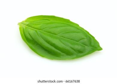Fresh leaf of basil
