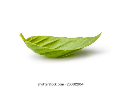 Fresh leaf of basil isolated on white background. Clipping path included.