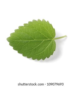 Fresh leaf of melissa ( Lemon balm )