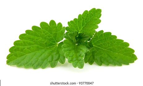fresh leaf of melissa on white background
