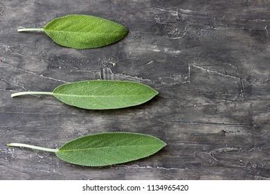 Fresh leaf of sage on a wooden surface
