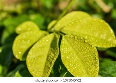 Fresh Leaves By Ashish