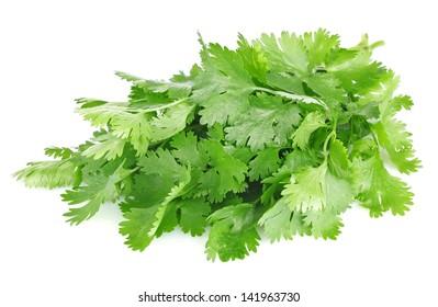 fresh leaves of cilantro isolated on white background