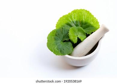 Fresh leaves of gotu kola in mortar with pestle on white background.