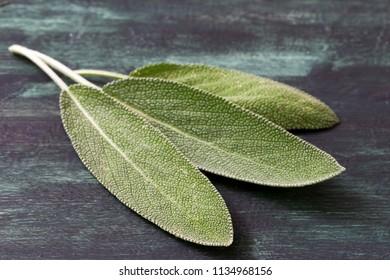 Fresh leaves of medicinal plants of sage