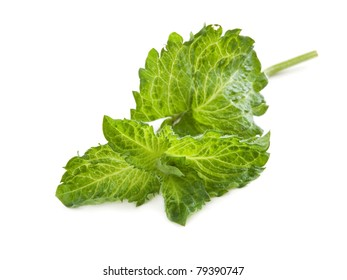 Fresh leaves of mint isolated on white
