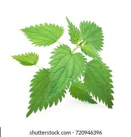 Fresh leaves of nettle isolated on white background