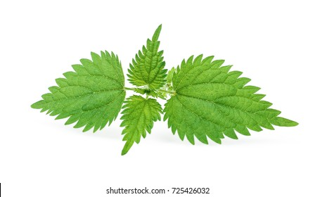 Fresh leaves of nettle isolated on white background