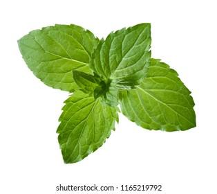 Fresh leaves of peppermint
