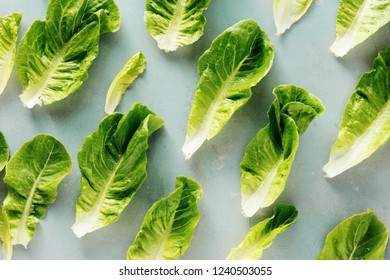 Fresh leaves Romaine lettuce on gray concrete background top view flat lay