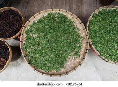 Fresh leaves of tea